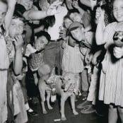 victory-pup-weegee