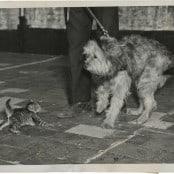You Big Sissy, 1941
